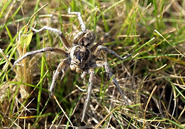 The Tarantula Keepers Guide Comprehensive Information on
