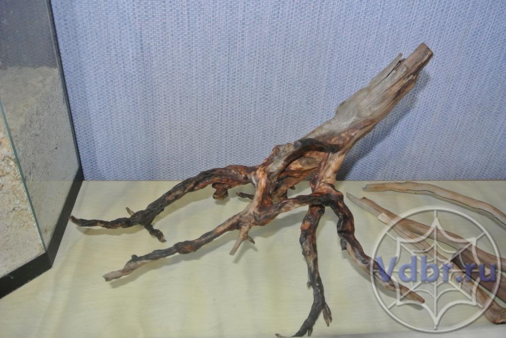 Как склеить террариум для паука в домашних условиях